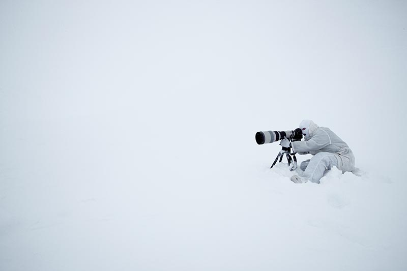 Blending in with the surroundings during a whiteout.