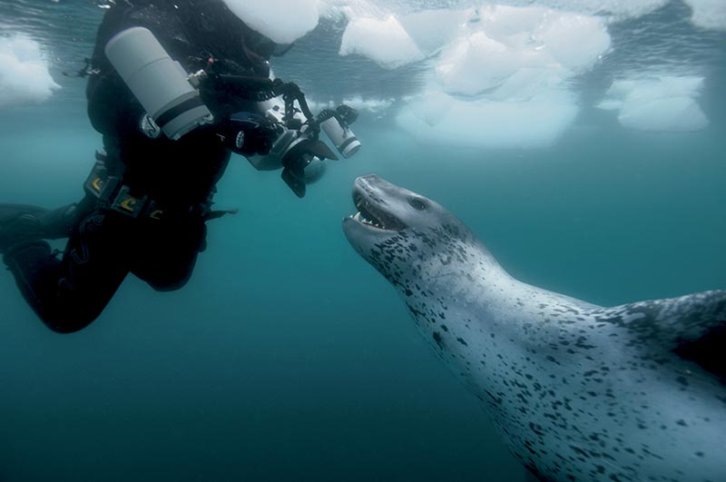A photographer on assignment with a leopard seal.